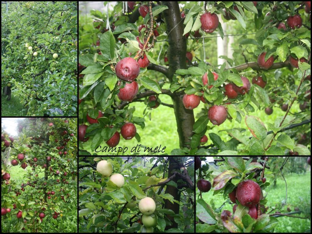 campo di mele