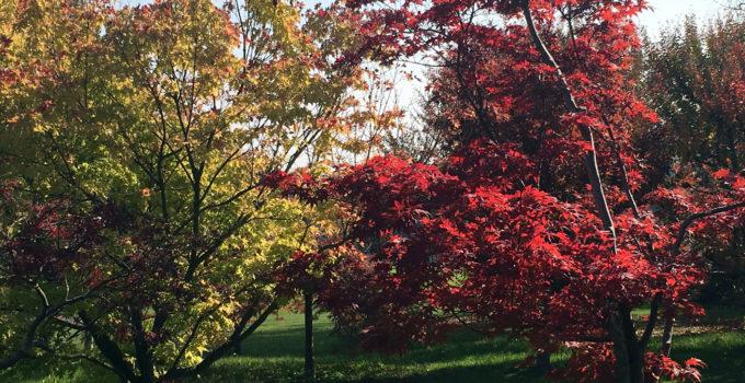 Foliage al Parco Sigurtà